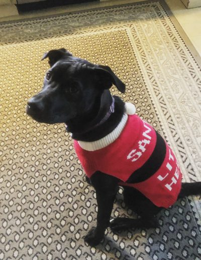 Josie, the Doggo